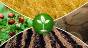 Куплю средства защиты растений,  Гербици́ды,  Инсектици́ды,  Фунгици́ды.